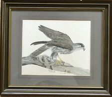 Reduced Lovely Vintage Print: Young Goshawk by John Morland, signed & numbered,