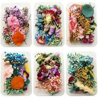 1Box Crystal Epoxy Filler Dry Flower Mixed Nail Stickers Decorations DIY Crafts