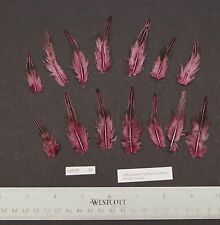 """Twelve 1.75"""" to 2.25"""" Pink Grey Jungle Fowl Cock Hackle Feathers Fly Tying"""