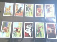1938 Gallaher DOGS breeds complete set 48 cards series 2 Tobacco Cigarette card