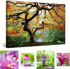 Eco de Luz Pared Arte Lienzo hermosa naturaleza, árbol de arce 60 X 90 Cm