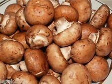 100 g Seeds Spores Royal Agaricus Bisporus Portobello mushrooms kit / fungus