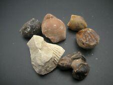 Small Sets Of Various Bivalve Marine Fossils, Good Condition, 50 Grams Minimum