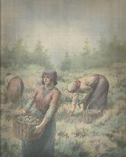 K0458 Raccoglitrici di chiocciole in un allevamento francese - Stampa antica