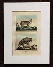 Impresión de color mano montado Buffon Antiguo c.1800 - grabado-Lince-Hiena