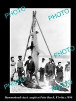OLD POSTCARD SIZE GAME FISHING PHOTO OF HAMMERHEAD SHARK CATCH c1890 FLORIDA