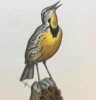 "Vtg 1968 Art Print Bird Illustration Color Litho Clark Bronson 11.5"" x 14"""