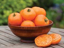 Vegetable - Tomato - Orange Wellington - 25 Seeds