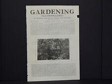 Gardening Illustrated Cover c1870/1880 Picturesque Fern Dell In Garden #63