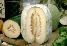 8 graines COURGE CIREUSE(Benincasa Hispida)PASTEQUE DE CHINE H861 WAX GOURD SEED