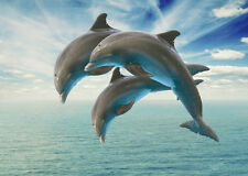 STUNNING DIVING DOLPHINS CANVAS PICTURE #3 SEA LIFE A1 CANVAS WALL HANGING ART
