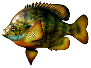 "Sport Fish Replica - 10""  BLUE GILL WALL MOUNT - Half Cast for the Budget Minded"