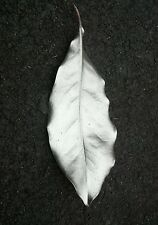 Magnolia leaves painted silver for Christmas holiday decorations natural; Qty 12