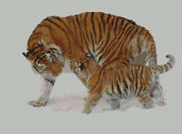 """Tiger and Cub Counted Cross Stitch Kit 15"""" x 11"""" A2110"""
