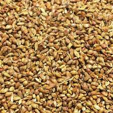 SORGHUM SEEDS Sorghum bicolor DRIED HERB, Loose Health Herbs 100g