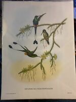 Vintage J Gould & W Hart Art Print Tropical Hummingbird Spathura Solstitialis