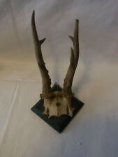 Antique German Folk Art on Wood Base Deer Antler #Av2