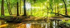 "Glasbild, Bild aus Glas, 125 x 50 cm Motiv ""0022_Wald"""