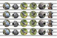 (24) African Greys Bottle Cap Image Pre-Cut 16mm