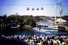 35mm Colour Slide- Dolphin Show 4 - Gold Coast Seaworld - Qld  1980's