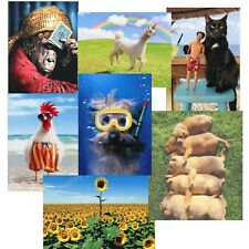 Lot of 14- Pet Lovers-People Avanti Greeting Cards-Great Assortment-All Occasion