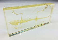 Real Lizard Skeleton Specimens In Lucite Paperweight Gift/Collection/Decoration