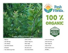 Fresh Guava leaves - 120 leaves - ORGANIC - Certified Fresh from Florida