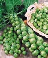 Seeds Brussels Cabbage Long Island Vegetable Organic Heirloom Russian Ukraine