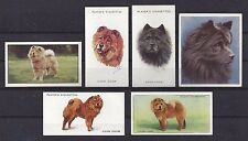 1929 - 1940 UK Dog Art Head & Body Cigarette Card Collection x 6 CHOW CHOW