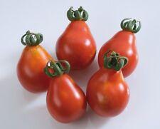 25 Graines de Tomate Cerise Poire Rouge Méthode BIO seeds légumes ancien potager