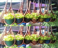New, Lot of 6 Rattan Wicker flower/orchid plants hanging baskets with wire hook