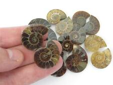 S.V.F - Ammonite fossil - Madagascar cut pair - 20mm - 30mm