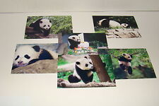 BAO BAO The Panda Bear Cub  #13