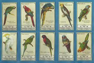 C.W.S...cigarette cards - PARROTS - Full mint condition set.