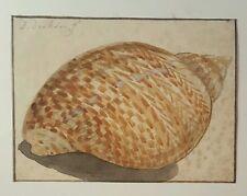 Firmada Pintura Original Acuarela Del Siglo 18th. 1700s holandés sea shell Dirksen