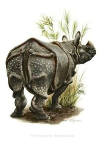 Impression Affiche papier Histoire Naturelle Rhinoceros d'Asie Unicornis print