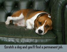 Metal Fridge Magnet Scratch Dog Find Permanent Job Humor Love Beagle Dogs
