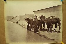 antique old PHOTO LEROUX  Arab Muslim AFRICA Camels ALGERIA 1890s