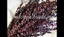 Dried Flower Preserved Glazed Washed Plum Purple Eucalyptus Fragrant Flower Stem