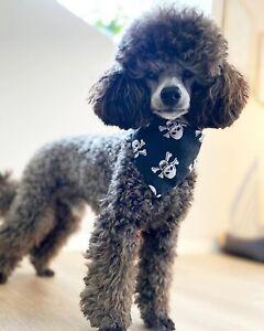 Pirate Skull & Crossbones Dog Pet Bandana Slip on Collar Style Neckerchief