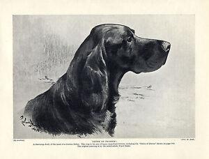GORDON SETTER NAMED DOG HEAD STUDY by WARD BINKS OLD DOG PRINT FROM 1934