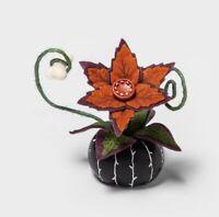Hyde and Eek Boutique! Target Halloween Ghoulish Garden Creepy Succulent 🌸