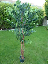 Large Artificial Ficus Benjamina Tree in a Pot Potted Tree Plant 1.8m 6'