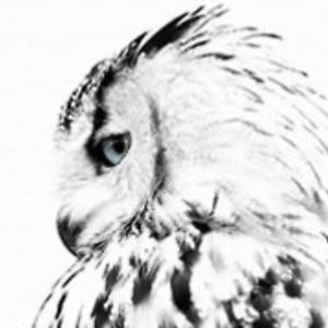 OWL art print on canvas, 30 cm x 40 cm
