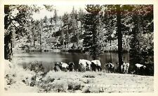 Old Real Photo PC; Horses by Lake Pack Train in the Ruby Mts, Elko County NV 118