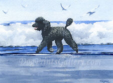 Standard Black Poodle Art Print Signed by Watercolor Artist DJ Rogers