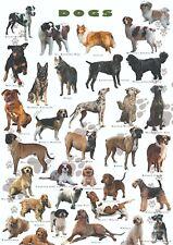 PLAKAT RELAKSUJĄCY Psy - NOWY  plakat A2 (42 x 59.4 cm)