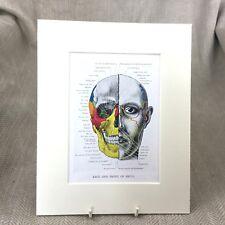 Antique Medical Print Anatomical Skeleton Skull Anatomy Art  Face Head