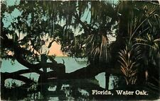 """Florida: """"Water Oak""""~~Man Stands on Twisted Trunk~Spanish Moss Hangs~1908 PC"""