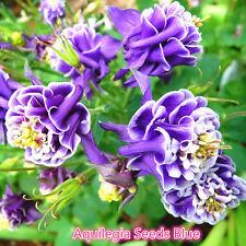 50PC Hot Aquilegia Vulgaris Seeds Blue Columbine Double Flower Plant Home Garden